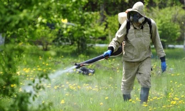 +38 (068) 245-2-474 уничтожение клещей в днепропетровской области. Фото